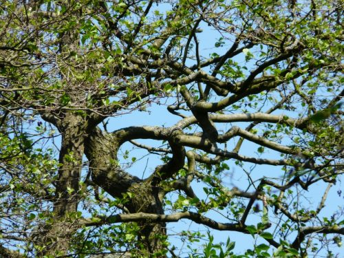 tree forms eye